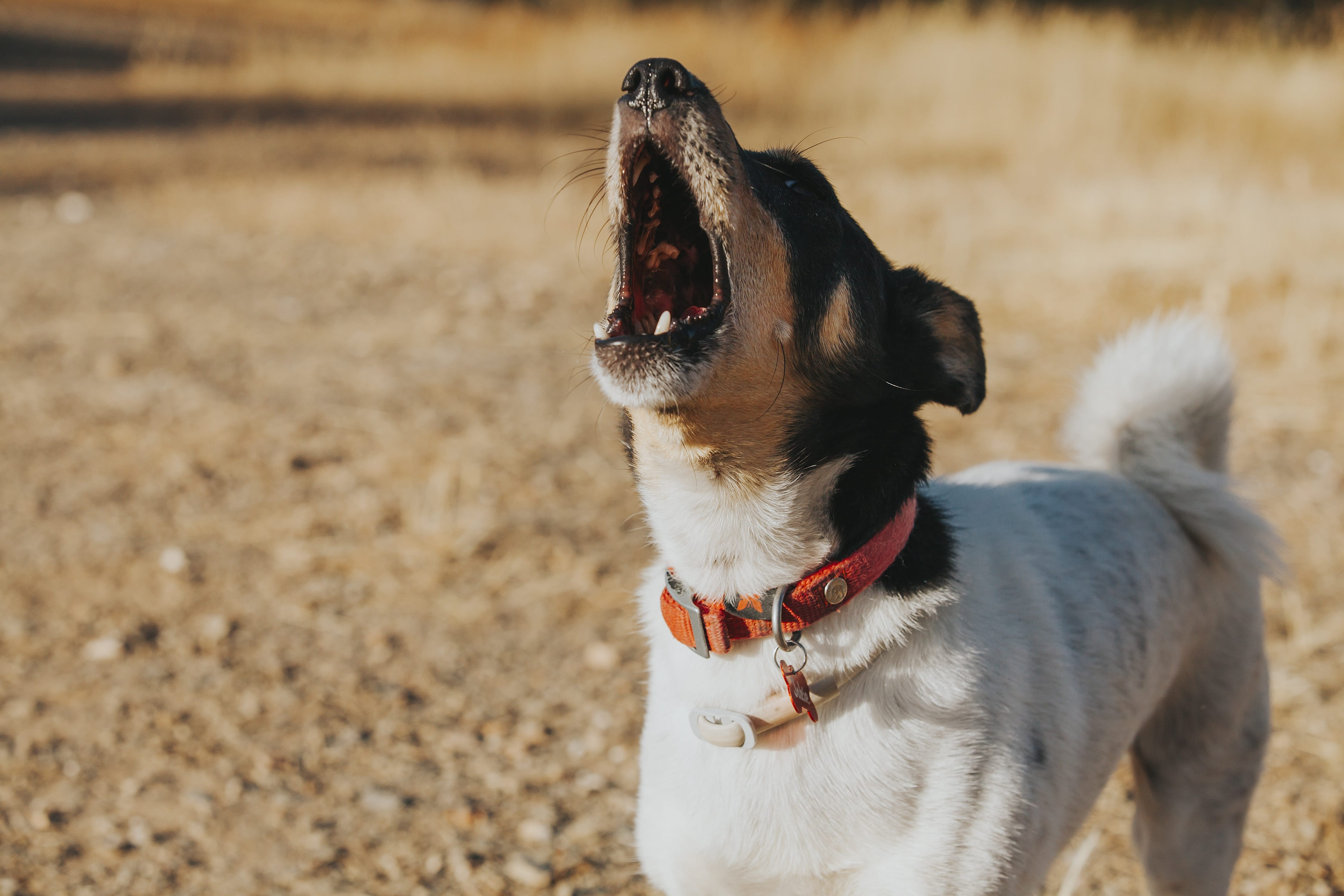 Dogs And Mental Health Issues